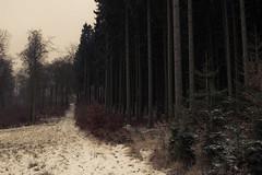 Winter (Netsrak) Tags: europa europe winter wald baum bäume schnee snow tree trees forest