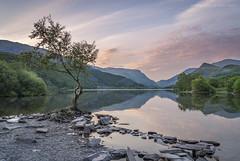 Lone Tree Llyn Padarn (marc_leach) Tags: llynpadarn lonetree llanberis snowdon snowdonia northwales mountain landscape lake nikon cymru
