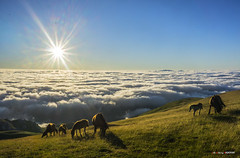 Goizean goiz Gorbeian (Jabi Artaraz) Tags: jabiartaraz jartaraz zb euskoflickr behorrak horses bruma amanecer sunrise sun sol contraluz landscape paisaje natura nature pax paz bakea