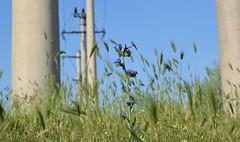 Wild flowers (fdlscrmn) Tags: wildflowers smileonsaturday field grass bee nature pov