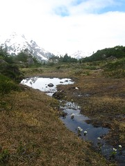 Bear Glacier (artofjonacuna) Tags: bear glacier seward alaska