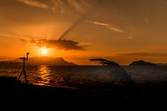 Golden Light (Jutta M. Jenning) Tags: sonnenuntergang himmel orange sundown asien wasser meer lichtschauspiel abend abendlicht daemmerung sunset landschaft natur nature relax ruhe stille silence malaysia asia langkawi tanjunrhu insel isle ocean palmen palmtrees water beach strand evening urlaub vacation landscape eos70d leuchten brightness sky clouds