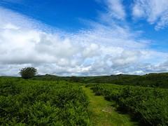 P7030684 (simonrwilkinson) Tags: dartmoor devon nationalpark uk venfordreservoir landscape path sky clouds