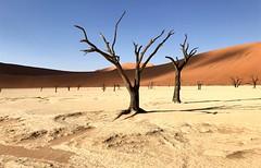 """""""Walking the Dead! - Dead Pan (Deadvlei) in the Namib-Naukluft National Park - Namibia. (One more shot Rog) Tags: sesrium sossusvlei deadpan deadvlei dune dunes namibia nationalpark namibnaukluftnationalpark scenery sand desert littlemamadune"""