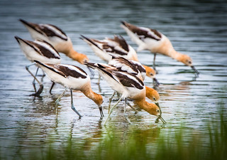 Group feeding....!