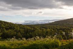 Svanfjellet (Bjørnar Sund) Tags: senja northernnorway arcticnorway troms lenvik summer midnightsun nature forest mountains svanfjellet arcticnature