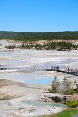 geysers below (ekelly80) Tags: wyoming yellowstone yellowstonenationalpark nationalparkservice nps june2017 roadtrip keisgoesusa optoutside findyourpark norrisgeyserbasin geyser thermal geothermal hotsprings view scenery above lookdown pools blue steam boardwalk colors water
