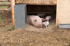 GoUrban_170727_Farm_122