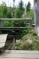 Moldauquelle (*Tom68*) Tags: outdoor wald baum tree trees forest tschechien quelle moldau kvilda böhmen