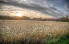 Countryside sunset (blavandmaster) Tags: sky kleuren hemel vand 35millions wolken nrw korn weizen landscape zonsondergang colours harmonic river beautiful gratitude incredible countryside lumière coquelicot sonnenuntergang ostwestfalen wasser photomatix weser hill eastwestphalia summer 2017 canon weat handheld est hdr badoeynhausen ciel juillet paysage tyskland poppy westfalen nuages zomer water interesting juli sommer awesome processing eau light rivière germany allemagne christiankortum landschaft westphalie duitsland flus himmel july deutschland clouds sunset lovely fields coucherdesoleil complete happy eos6d r