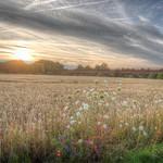Countryside sunset thumbnail