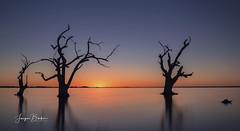 Lake Bonney (Jacqui Barker Photography) Tags: southaustralia australia riverland lakebonney silhouette deadtrees lake sunset
