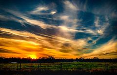 Afterglow (Sonia Argenio Photography) Tags: evening flickrsoniaargenio ocalafl outdoors soniaargenio soniaargeniophotography sunset trees yellow afterglow blue clouds florida gold oaks sky sun