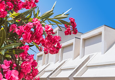 Herculaneum (TSJOliver) Tags: herculaneum ercolano abstract architecture building flower pink sky italy