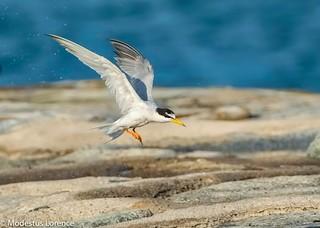 Tern - play time