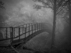 Mystery forest fog at footbridge (cyangLtravel) Tags: mist landmark bw greyscale tree bridge fog dark landscape conception taiwan oldstyle traditional