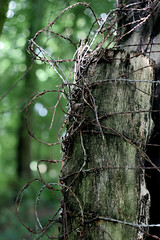 Stacheldraht im Wald (Sylithio) Tags: stacheldraht wald barbed wire