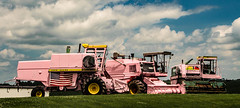 Pretty In Pink (Images by MK) Tags: pink conbines farming farn rural agriculture clouds farm farmstead implement machinery machine wisconsin wi summertime masseyferguson johndeere jd