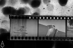 03 (andrea.fogliacco) Tags: film pellicola ilford fp4 plus sviluppo rullini vintage black white develop developed reflex old school vecchia scuola