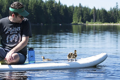 Dave n Ducks (spollock61) Tags: trilliumlake water ducklings paddleboard oregon mthood trees nikon cute cuteness