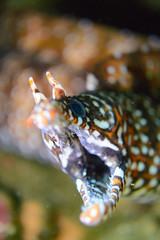 20170716-DSC_0764.jpg (d3_plus) Tags: 南伊豆 southizu drive fish port apnea zoomlense ucl165m67 185mmf18 underwater nikon1 景色 魚 ウォータープルーフケース watersports wpn3 sky 日本 マリンスポーツ japan marinesports ニコン 50mmf18 50mm izu nikon diving 素潜り クローズアップレンズ inon nikkor 水中 スキンダイビング nikon1j4 skindiving ニコン1 海 snorkeling 1nikkor185mmf18 sea nikonwpn3 scenery 息こらえ潜水 ズーム closeuplens inonucl165m67 185mm 空 j4 waterproofcase シュノーケリング 風景
