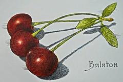 Three Balaton Cherries-HMM! (So nice, Sunny & Cool!) Tags: macromondays three balatoncherries red stem leaves green