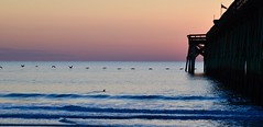 Flying low.  Sunrise, Pawley's Island (shireye) Tags: pawleysisland usa southcarolina sc nikon d610 24120 ff fullframe fx sunrise pier atlanticocean birds horizon waves reflections