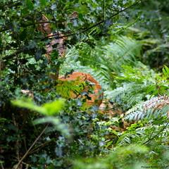 1er principe d'optique. (Phil du Valois) Tags: chevreuil chevrette faune sauvage libre forêt domaniale retz villers cotterêts roedeer roe deer wild wildlife free optique