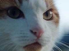 EM10 2017 07 25 (Sibokk) Tags: beasts camera cats digital em10 olympus omd photography scotland uk edinburgh