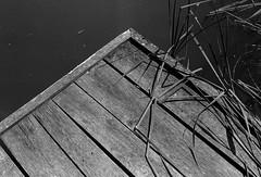 *** (gcond) Tags: bw blackwhite blackandwhite expired expierdfilm selfdeveloped people leica leicam6 35mm leitz rangefinder r09 grain drama dramatic travel theanalogueproject tmax100 hyperfocal buyfilmnotmegapixels sunny holidays lifestyle filmphotography analogphotography outdoor summicron35 itsnotacapture film filmisnotdead kingofbokeh vilage monochrome kodak moldova paralax allmanual analog nature landscape shootfilm vintagecamera
