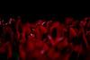 drowning in red (e-box 65) Tags: trondheim red tulip tulips flower dark norway rot tulpe d5300 55 300 norwegen dunkel nidaros blumen