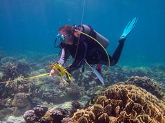 Diver (PacificKlaus) Tags: malapascua visayas cebu philippines underwater ocean nature scuba diving peopleandthesea survey diver