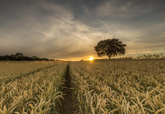 Lone Tree Sunset (Snap Tin) Tags: sunset lone tree lonetree sony alpha summer sun derbyshire july evening