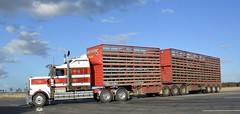 O'Sullivans (quarterdeck888) Tags: trucks transport semi class8 overtheroad lorry heavyhaulage cartage haulage bigrig jerilderietrucks jerilderietruckphotos nikon d7100 frosty flickr quarterdeck quarterdeckphotos roadtransport highwaytrucks australiantransport australiantrucks aussietrucks heavyvehicle express expressfreight logistics freightmanagement outbacktrucks truckies osullivans paulosullivan t908 kenworth stockcrate livestocktransport bdouble bdoublestockcrate