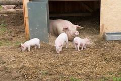 GoUrban_170727_Farm_128