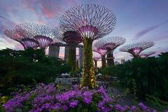 Supertree Grove (Eddie 11uisma) Tags: singapore supertree grove marina bay