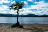 Millarochy Bay (kieranjohnoneill) Tags: 2017 kieranoneill lake lochlomond milarrochy nationalpark nature outdoors scotland scottish trees trossachs water millarochybay