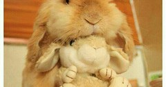 Just Pinned to Bunnies: Bunny http://ift.tt/2sFgwLZ (FluffWonderland) Tags: thed4rkestrose june 19 2017 1230ampinterest bunnies