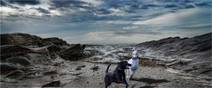 Playtime at The Beach (elpedro1960) Tags: narrowneck beach devonport auckland new zealand dogs greyhound playing running seascape waves water sea rocks