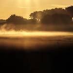 Golden morning thumbnail