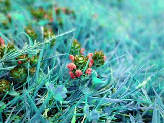 Flora magic I