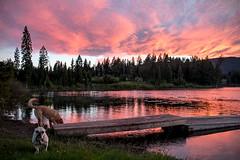 Bubba Gum Skies 🍬💖🌲 Harmon Lake, BC (Michael Thornquist) Tags: happyinthewoods harmonlake merrittbc lake pink cloudporn sunset camping britishcolumbia trees 604now photos604 explorecanada ilovebc pacificnorthwest pnw canada