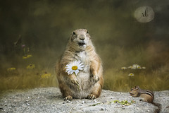 Oh Happy Day (Rrea Brown (Photography)) Tags: whimsical prairiedog animals rodents chipmonk jaijohnsontextures summer zoolife rreabrownphotography