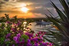 Texas Gulf Coast Canal Sunset (Andrea Garza ~) Tags: porta portaransas padreisland texas tx beach beaches sunset boat boating bougainvillea yucca canal mustangisland dusk tropical coastal fishing