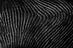 Macro mondays texture (rondoudou87) Tags: macromondays macro close closer fingers texture pentax k1 monochrome noiretblanc noir blanc black blackwhite white