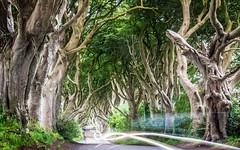 Standing My Ground (Stoates-Findhorn) Tags: 2017 armoy avenue ballymoney beech car darkhedges gameofthrones headlights kingsroad northernireland trees unitedkingdom olympusflickraward