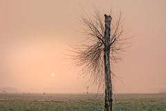 Life on Mars (Jorden Esser) Tags: fence grass htmt pinksky sun tree treemendoustuesday trimmed frost windmill tmt birch