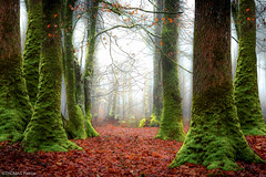Big foot! (pat.thom974) Tags: trees wood forest foot fog leaves red green mood morning