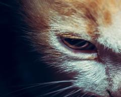 Bad kitty (snkoigi) Tags: animal domesticcat pets mammal whisker cute feline domesticanimals fur looking oneanimal kitten blackcolor younganimal animalsandpets animaleye animalhead closeup gray paw