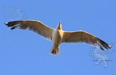 seagull2017_04.jpg